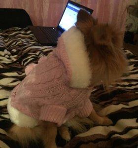 Новый свитер для собачки (девочки)