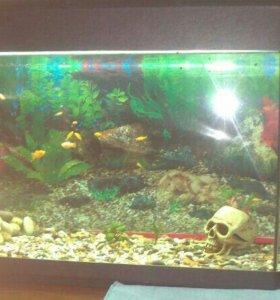 Аквариум на 100 литров с рыбками малинезии жолтые