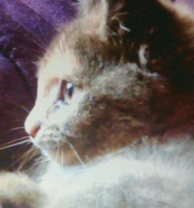 Плюшевый котенок