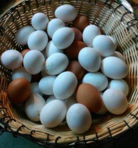 Яйца куриные домашние свежие