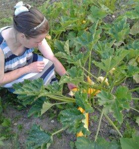 Уход за оранжереей и теплицами