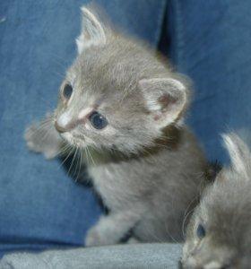 Котенок в заботливые руки