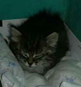 Котенок сиротка