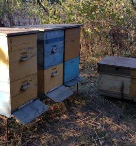 Улья для пчел/дерево