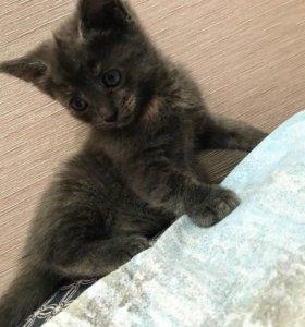 Котёнок-девочка (кошка)