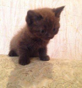 Продаются плюшевые котята