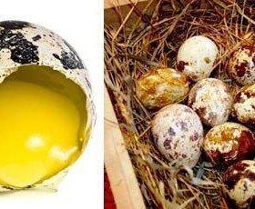 Перепелиное яйцо диетическое