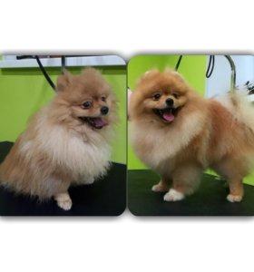 Стрижки собак