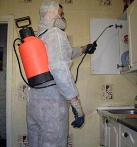 Уничтожение тараканов в Новосибирске