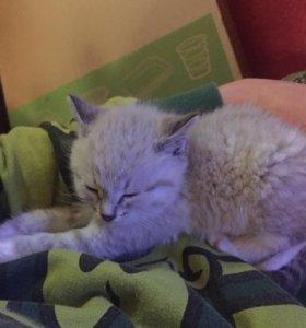 Котёнок.😻
