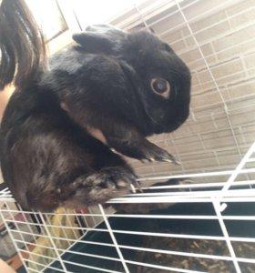 Кролик с клеткой даром