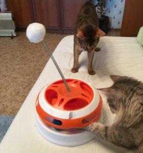 Игрушка для кошек и котов с шариком и помпоном