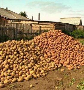 Продам картофель!!!