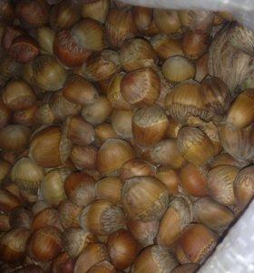 Продам лесной орех
