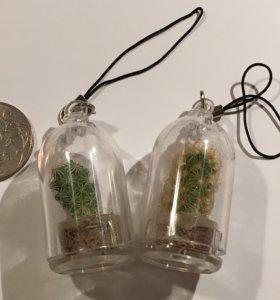 Живой мини кактус брелок