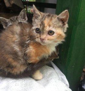 Трёх цветные котята в добрые руки