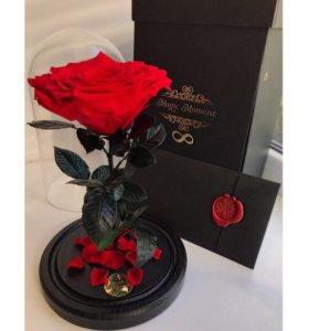 Цветы Живая Роза в стеклянной колбе