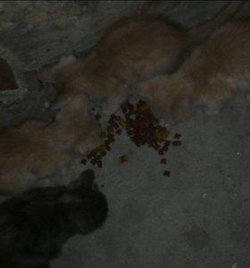 Котята в добрые руки 😻