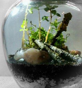 Флорариум в подарок, улитка, мох, цветы
