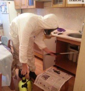 Уничтожение муравьев в Новосибирске