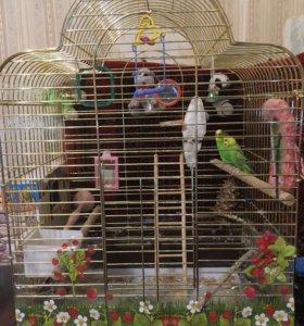 Попугаи в клетке.