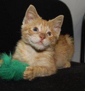 Котенок в добрые руки Смуффи, кот в дар