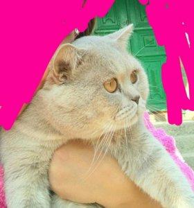 Котик жених