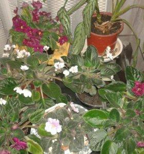 Комн.цветы
