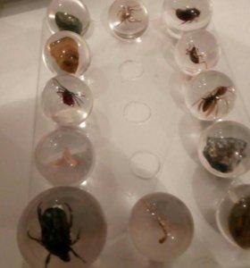 Коллекция насекомых и минералов