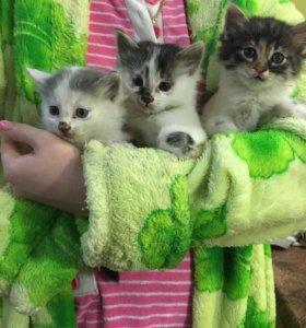 Ласковые и добрые котята