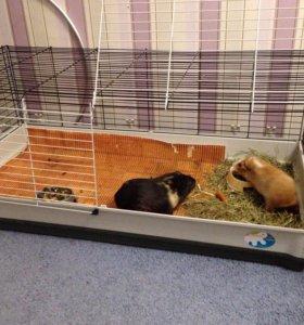 клетка для кроликов, морских свинок