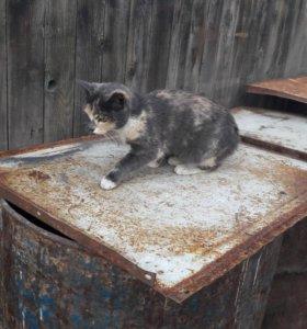 Подарю кошку,живёт на улице замерзает жалко