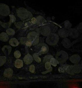 Дрова акация!Спил деревьев!