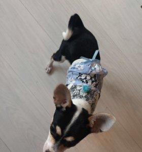 Одежда для собаки маленькой породы