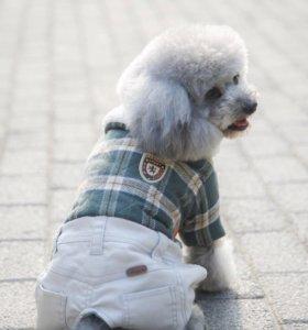 Одежда для собак, комбинезон