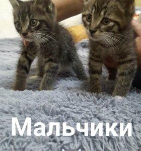 ОТДАДИМ КОТЯТ В ХОРОШИЕ РУКИ;)))
