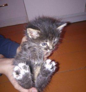 Отдам котов в хорошие руки