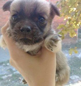 Собачки в добрые руки