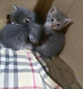 Котятки 1 месяц .