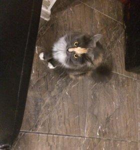 Отдам кошку!!!!