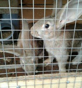 Крольчатина, кролики