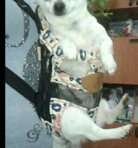 Переноска для мелких собак и кошек.