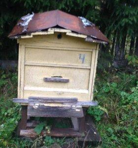 Пчёлы с домиком