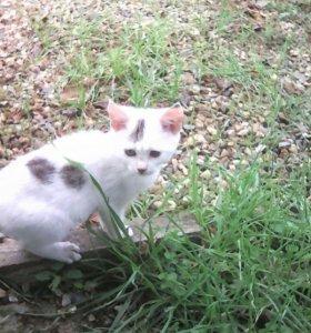 Умненикий котик