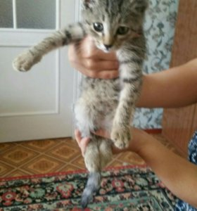 Отдаю котят в хорошие руки