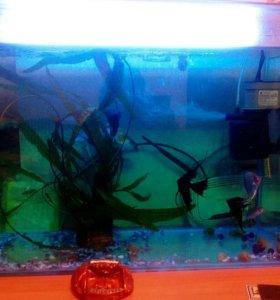 Продам аквариум 110 литров,полностью укомплектован