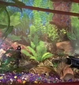 Аквариум с рыбами продаю