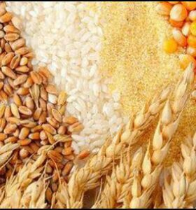Пшеница,кукуруза,ячмень