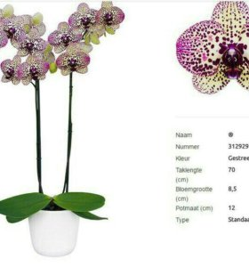 Подростки орхидей