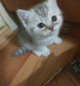 Милашка котенок девочка